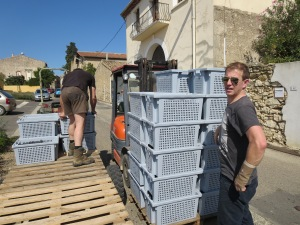 Gavin Monery loading grapes chez Coutelou