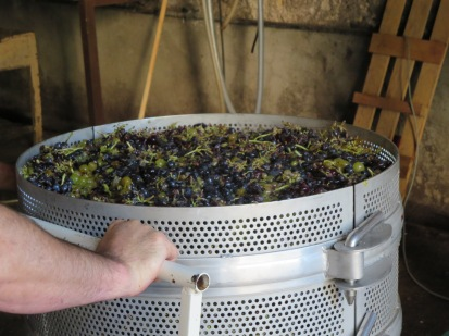 Grenache and muscat grapes ready for pressing