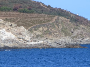 Vineyards in Banyuls stretching down to the Mediterranean Sea