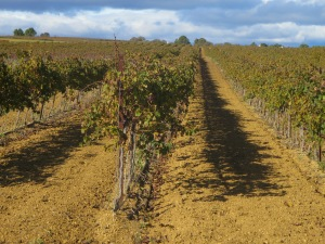 A regiment of vines