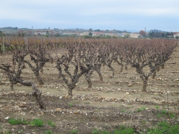 Gobelet vines