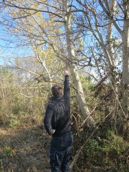 Jeff pointing to debris from the stream in the tree branches