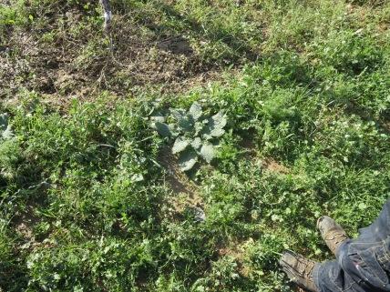 Biodiversité - un analyse démontre qu'il y a plus que 30 espèces de l'herbe dans un mètre carré