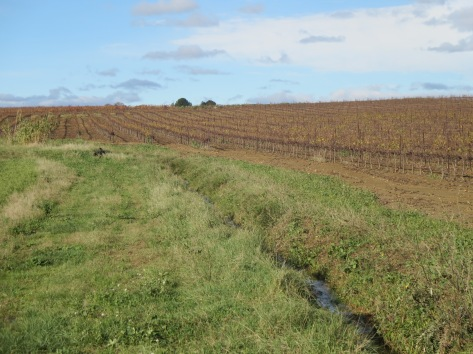 Un contraste absolu entre les vignes de Jeff Coutelou et celles d'un voisin