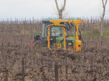Machine pruning vines, the yellow arm contains the blades