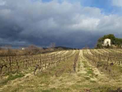Wintry vineyard