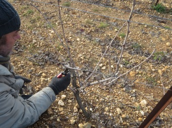 Getting to the heart of the vine