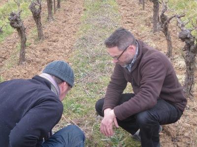 Jeff et Manu. ils étudient les herbes semées entre les vignes Cela va aider a garder de l'eau, renforcer la structure du sol et va attrayer les insectes
