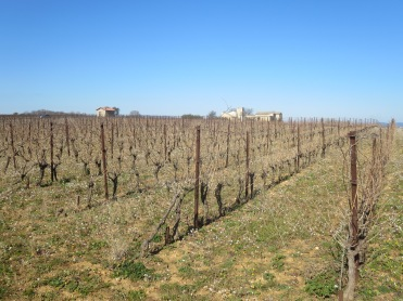 Main Metaierie vineyard, home of Vin Des Amis