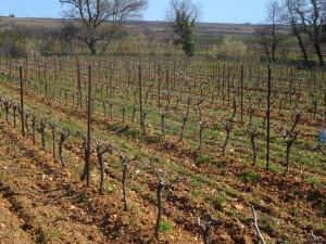 Beginning of April, La Garrigue