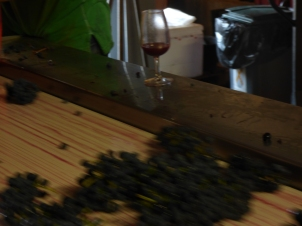 Syrah moving fast, the juice is in the glass