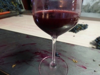 Mourvedre juice with more Mourvedre on the table