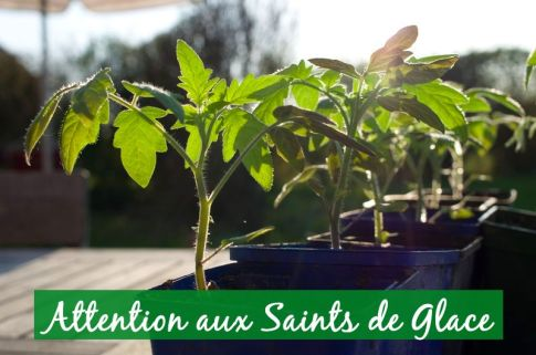 attention-aux-saintes-de-glace