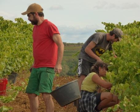 Vincent, Julien and Selene